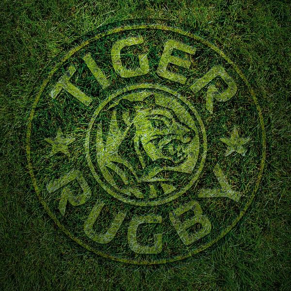 Tiger Maddy-j