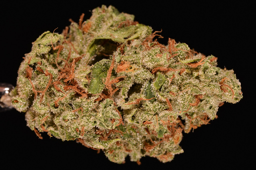. No. 17: Super Lemon Haze (Ry Prichard, The Cannabist)