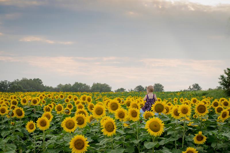 SuzysSnapshots_Sunflowers_Us-6636.jpg