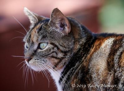 Cats of Lānaʻi (2019)