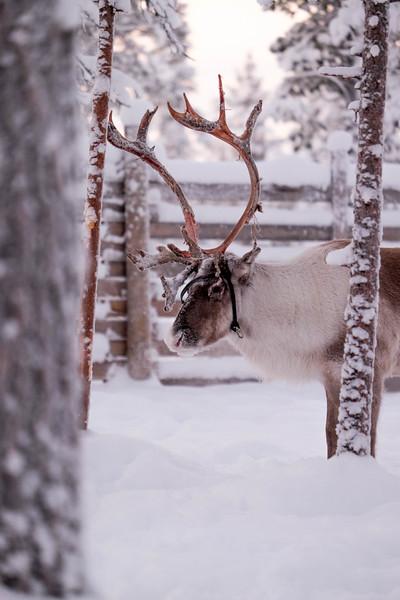 Finland_160117_96.jpg