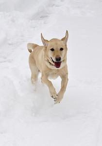 Snow Storm 2010 - 2.5.10