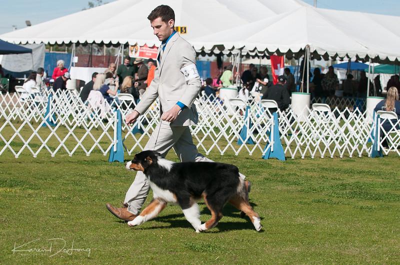 20170205_Australian Shepherds_Lost Dutchman Kennel Club-2.jpg