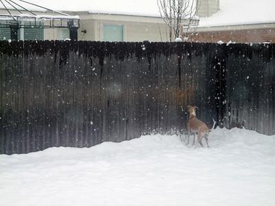 Snowstorm 11-12 Feb 2010