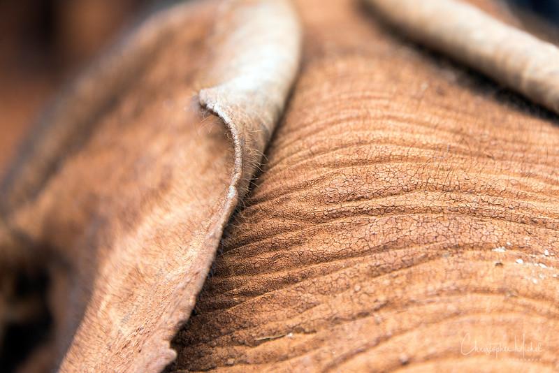 Aug312013_nairobi_blixen_elephant_2470.jpg