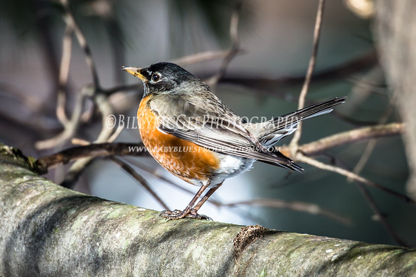 Birds of Spring - 07 Mar 2015