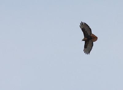 Birding Rockingham County, VA; 3-20-10