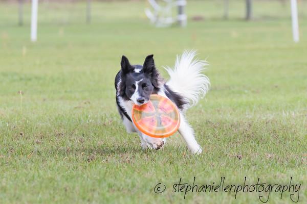 _MG_2760Up_dog_International_2016_StephaniellenPhotography.jpg