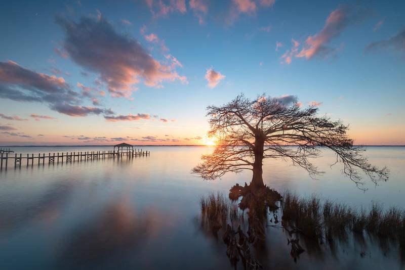 Duck tree.jpg