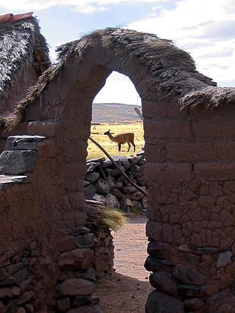 Around Puno, and back home