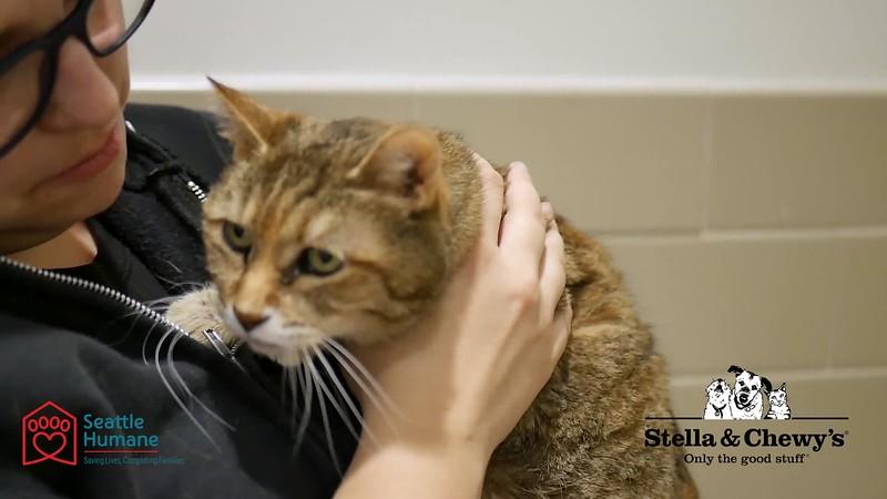 Lotsa Love - Stella & Chewy's Sponsored Pet