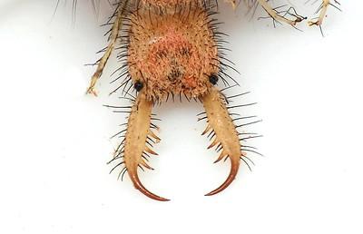 Larvae unknown species