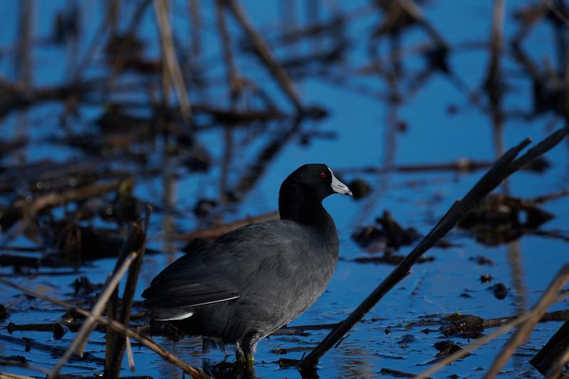 20181103 - Brazoria Wildlife Refuge-85B_3919.jpg