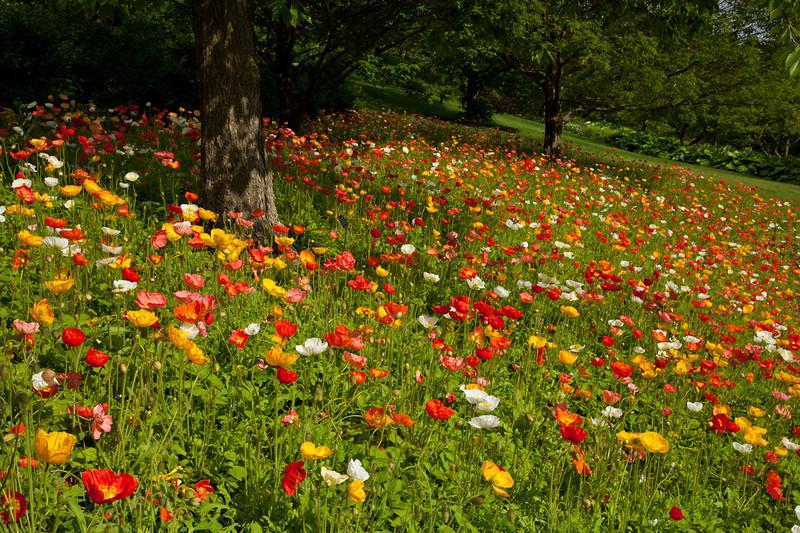 Botanic_Garden13-0610.jpg