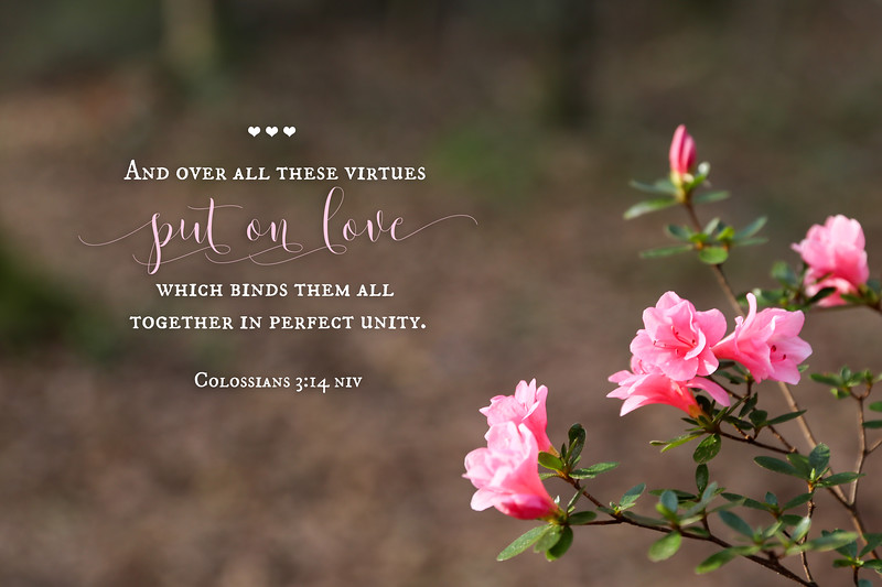 51_Colossians3-14_NJ_2019-2-27.jpg