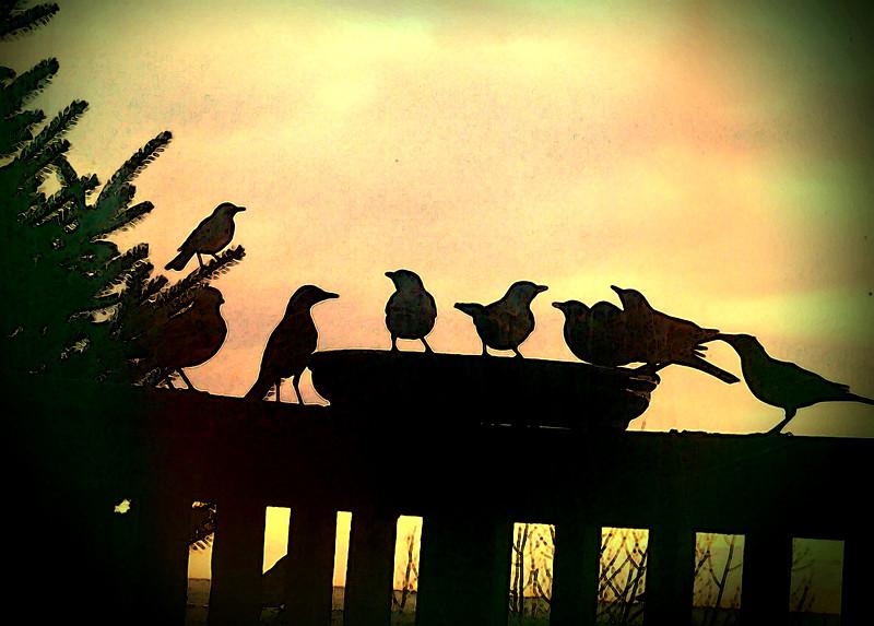 birds (161).jpg