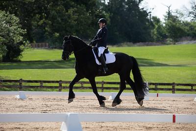 Horse 361