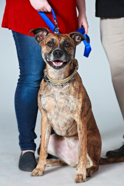 Picture Pawfect - 19 marca 2017 - 399-1.jpg