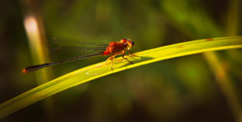 Bugs and Beetles - 48.jpg