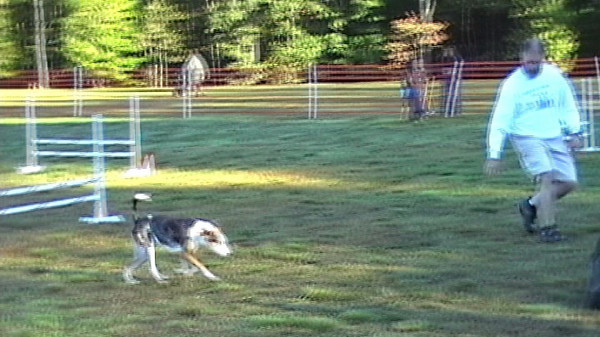 2010-10-03 CPE Agility Video Clips