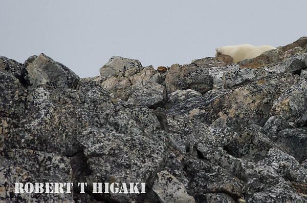 Holmiabukta, Svalbard