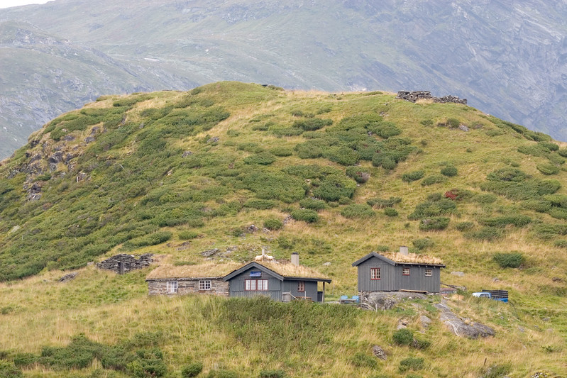 Schapen op het dak. Sheep on the roof.