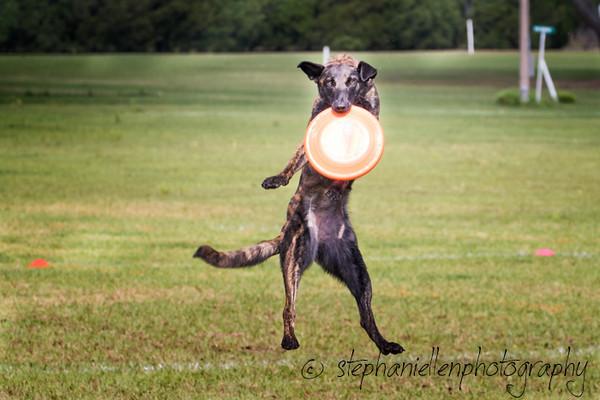 _MG_2674-EditUp_dog_International_2016_StephaniellenPhotography.jpg