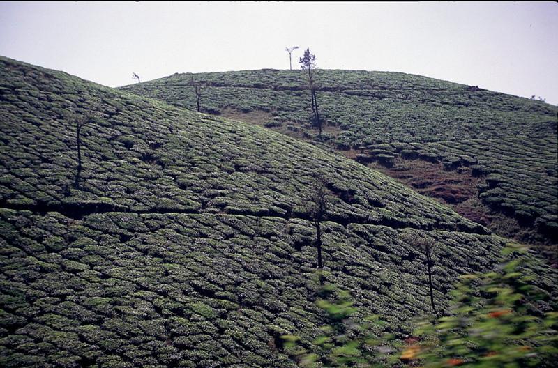 India2_043.jpg