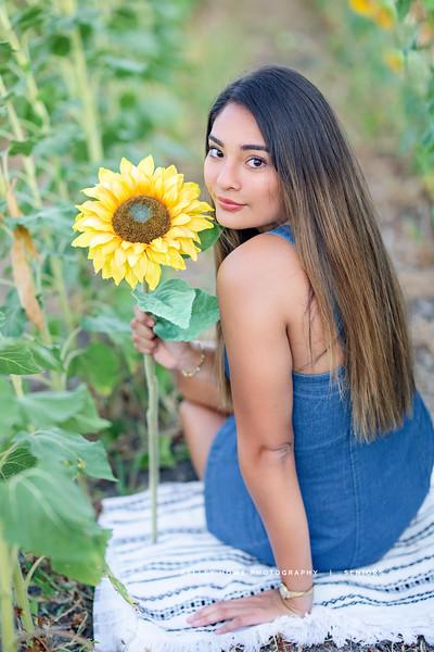 Sunflower 0816.jpg