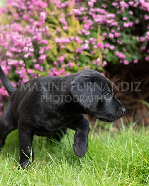 Weika Puppies 24 March 2019-6420.jpg