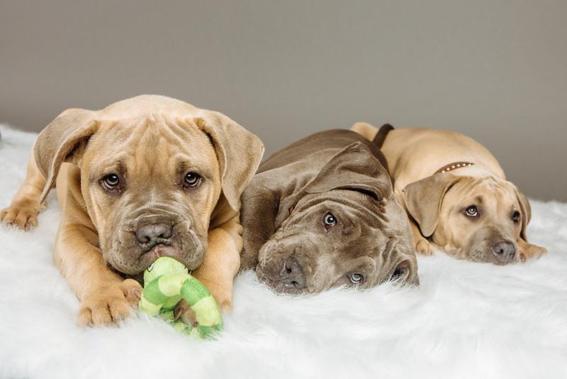 badap-puppies-46.jpg
