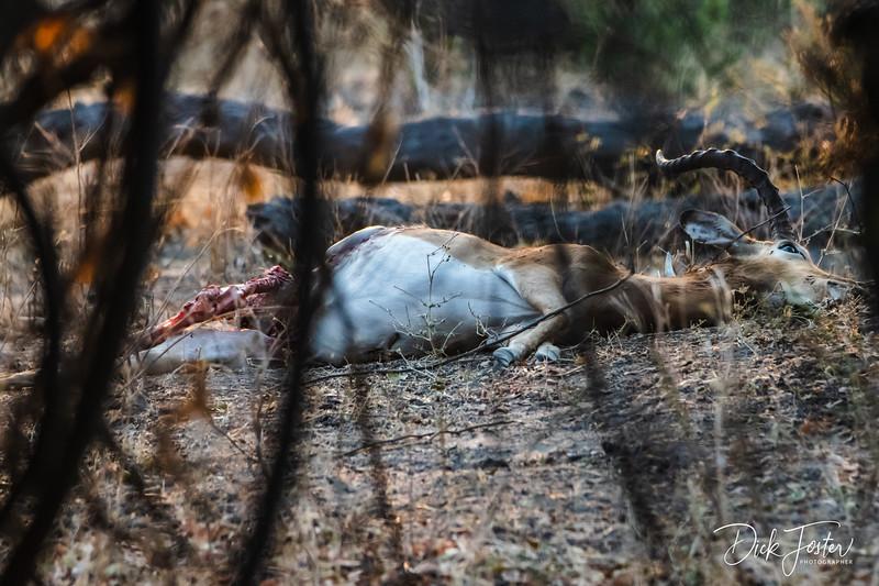 Impala Kill