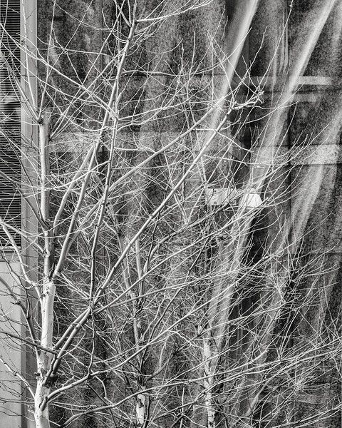 trees, brookfield place