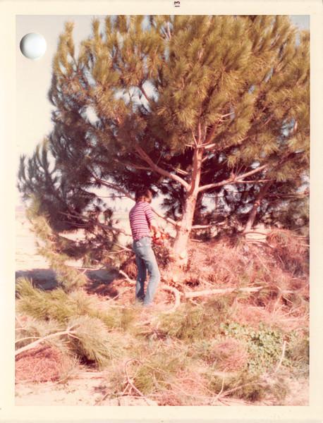 David 1974