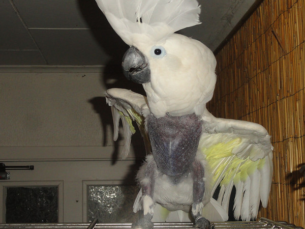 Self Mutilated neglected Parrots Rescued