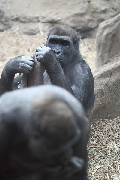 Zoo Trips