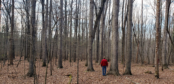 SOLD: 102 Wooded Acres