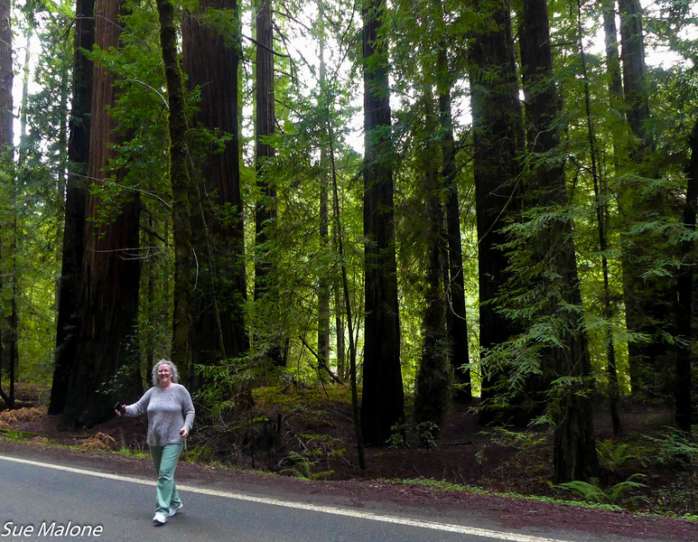 02-16-2021 Part 2 Exploring the Avenue of the Giants-3.jpg