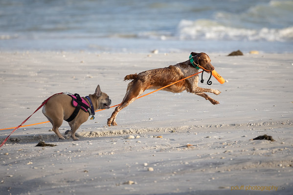 Dog Beach March 2021