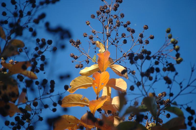 Fall Color 002.jpg