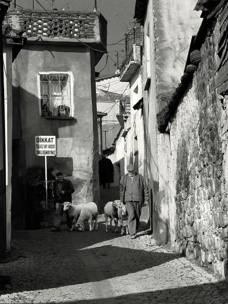 Men with goats. Bergama, Turkey, 2007.