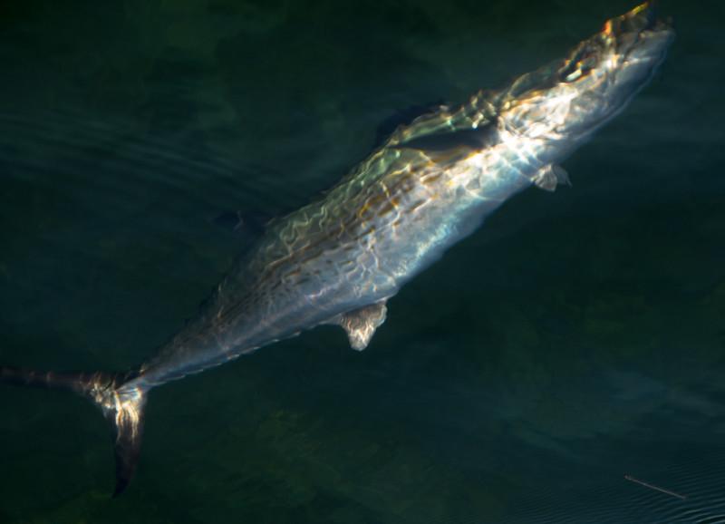 florida bay fishing-59