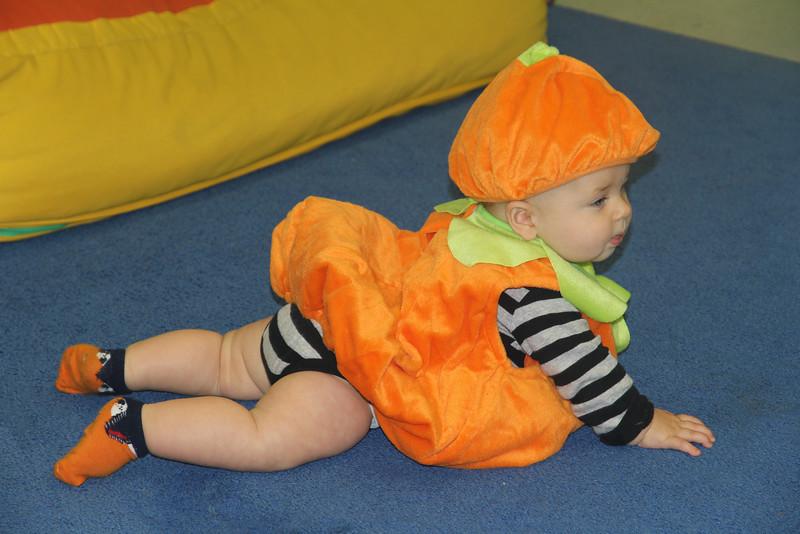 a well-fed pumpkin