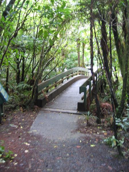 Waipoua Kauri Forest