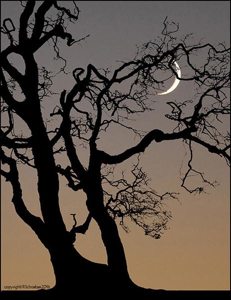 Moon & Tree.jpg