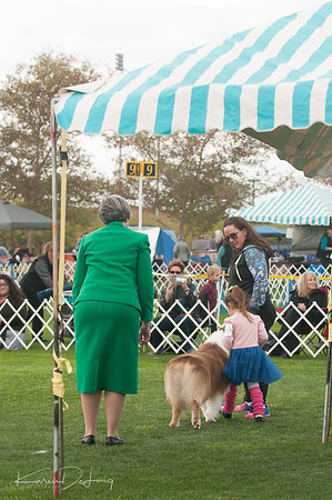 20170114_Kachina Kennel Club_Aussies-8.jpg