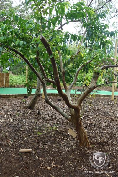 Botanical Garden, Kauai