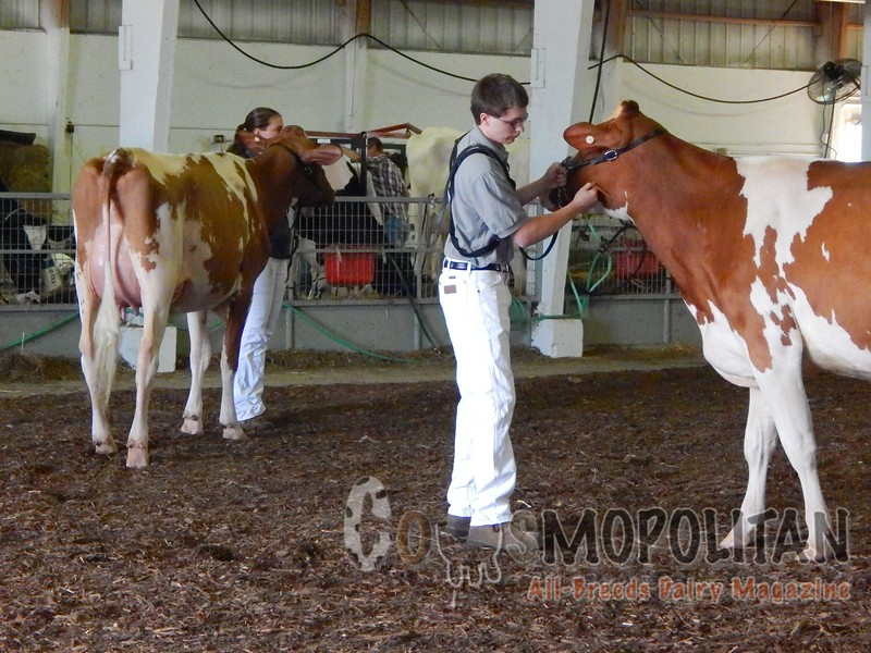 Minnesota State Holstein Shows 2016