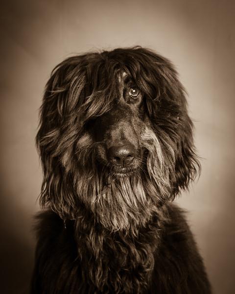 Pets - Pete Griffith - 13.jpg