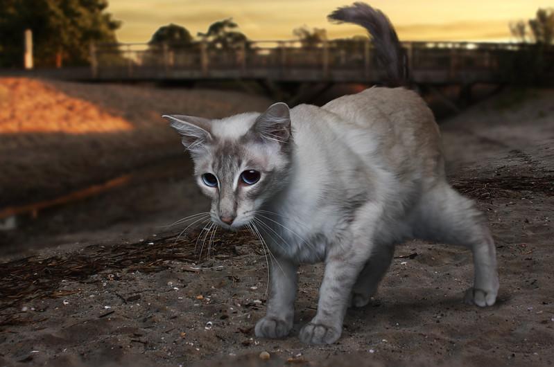 Saule-cat-20.jpg